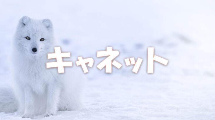 北海道の優良街金キャネットは激甘審査でブラック人気No1!